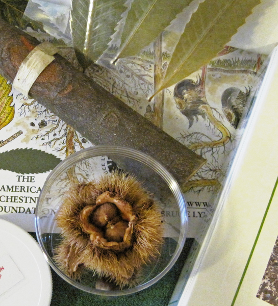 The American Chestnut Learning Box