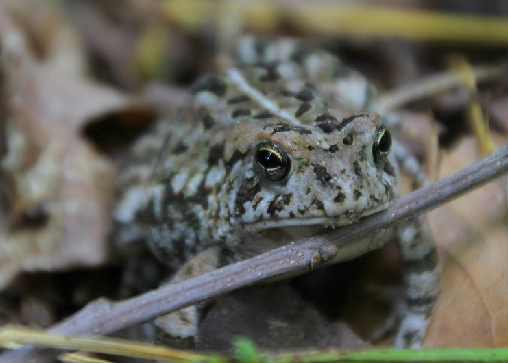 Early Blooms, Songbirds, & Spring Frogs Soup 'n Walk - March 17