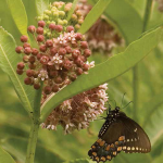 Butterflies & Insects Workshop - September 8