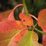 Dazzling Fall Color Soup 'n Walk - October 21
