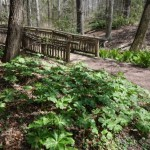 The Native Garden at the National Arboretum - April 26