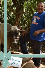 Give a Pregnant Cow: When you give a Gift of Opportunity, we will send a card to honor the person of your choice. In Nicaragua, a family will benefit from your gift for years to come. <br /> <p style=