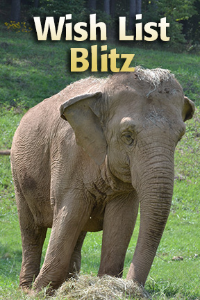 Wish List Blitz