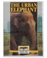 The Urban Elephant-DVD