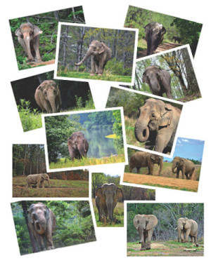 Elephant Photo Cards