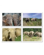 Elephant Photo Greeting Cards