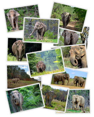 Elephant Greeting Cards Set 1