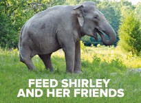 Help Feed Shirley and Her Friends