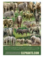 Elephant Collage Poster