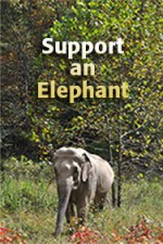 Support an Elephant