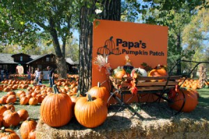 Papa's Pumpkin Patch Midco Day-September 15th